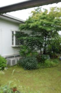 くもの巣1.JPG